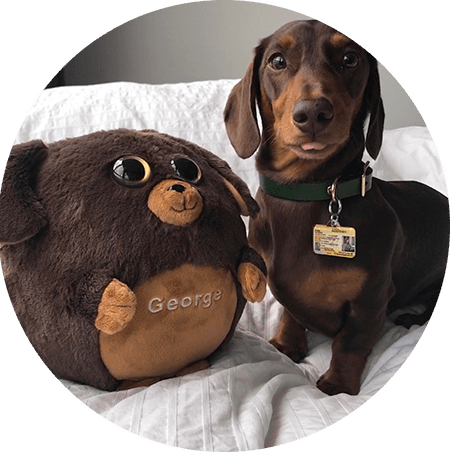 brown dog with waggables plush