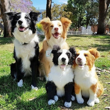 petsies custom stuffed animal border collie