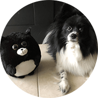 black and white dog with waggables plush
