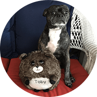 brindle dog with waggables plush